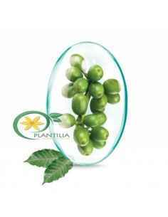 Green Coffee Extract(Cafea Verde) 120 cps Rotta Natura