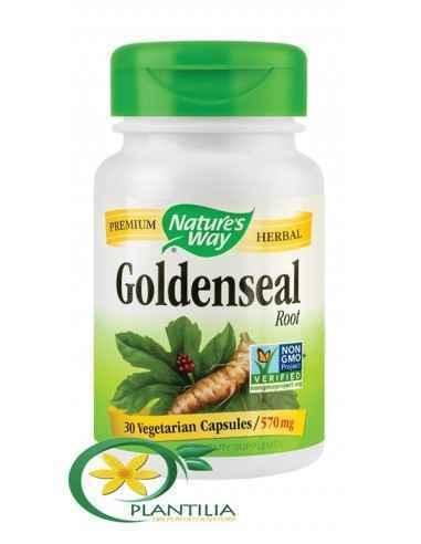 Goldenseal 30 cps Secom Nature's Way, Goldenseal 570mg 30 capsule Nature's WayAntibiotic natural si protector al tuturor mucoase