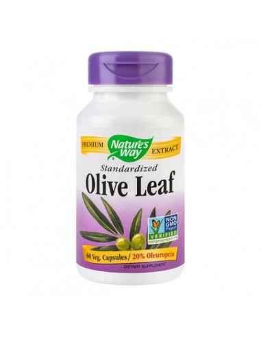 OLIVE LEAF 60CPS (20% OLEUROPEIN) - Secom Frunza de Maslin, cu rol in echilibrarea sistemului imunitar, prin reducerea actiunii